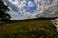 Field of Buttercups - Mirador