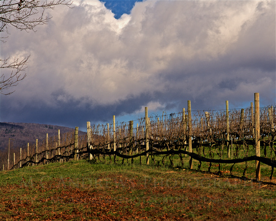 Bracing for Weather - Snow Showers in Wine Country